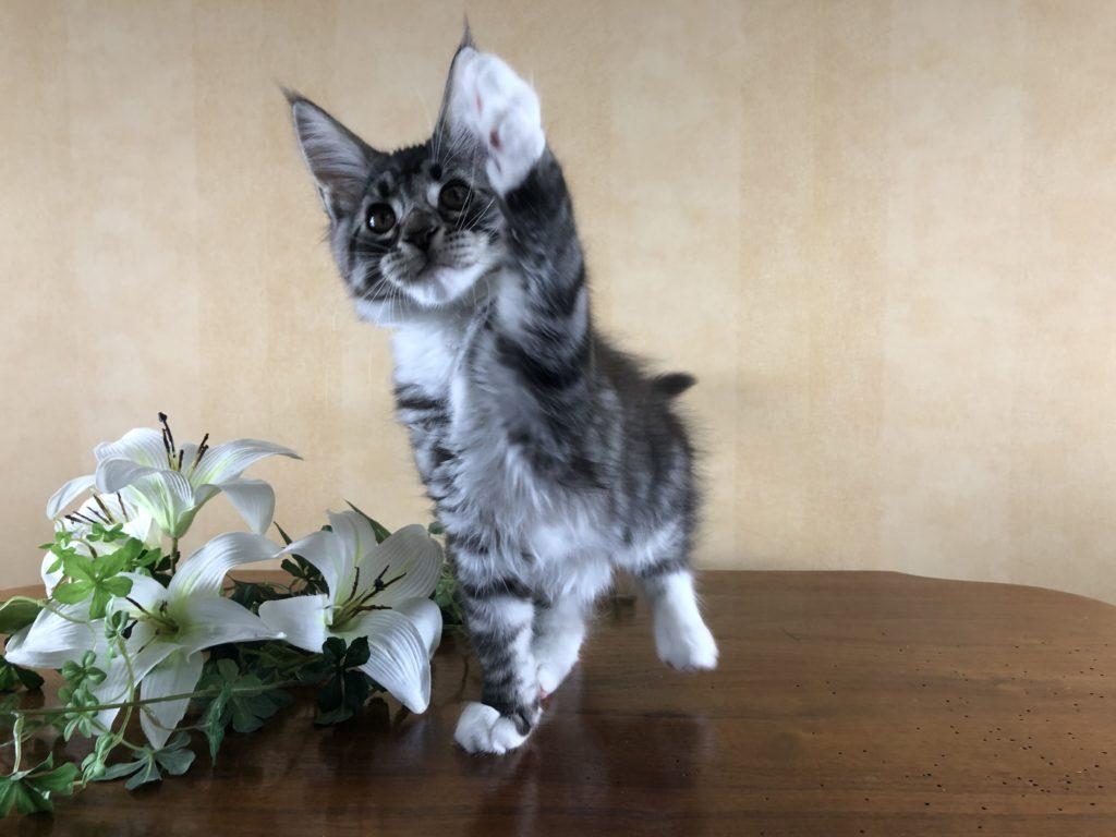 Ella 12,5 veckor