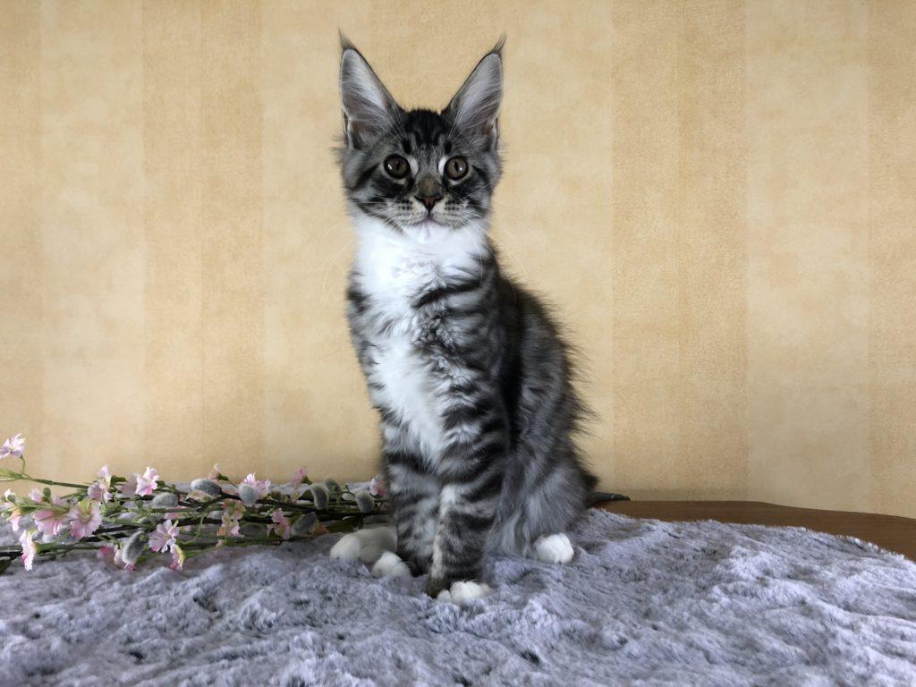 Ella 13,5 veckor