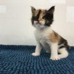 Katt 5 Betty 4v