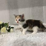 Katt 4 4v