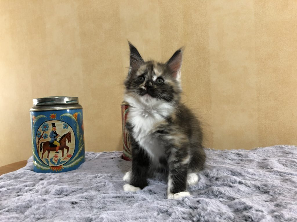Alice 7 veckor