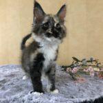 Katt 8 Alice 9v