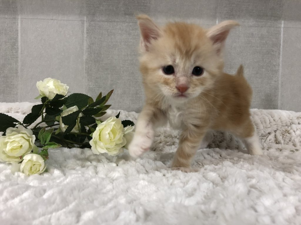 Leo 4 veckor