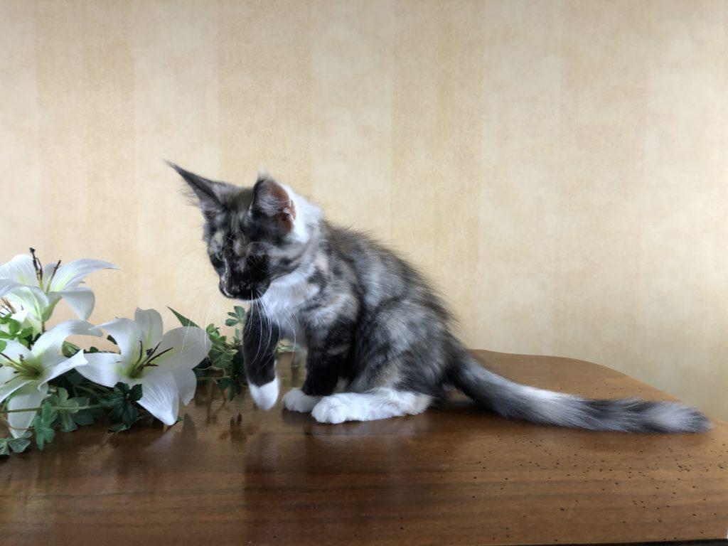 Alice 12,5 veckor